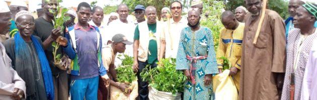Mois de l'arbre : Les fidèles auditeurs de la radio la voix du paysan, mettent en terre 200 plants à Namissiguima